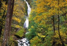 Wahkeena Falls in the fall at the Columbia River Gorge