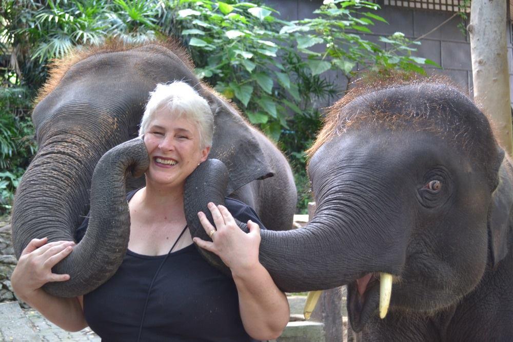 living in chiang mai elephants