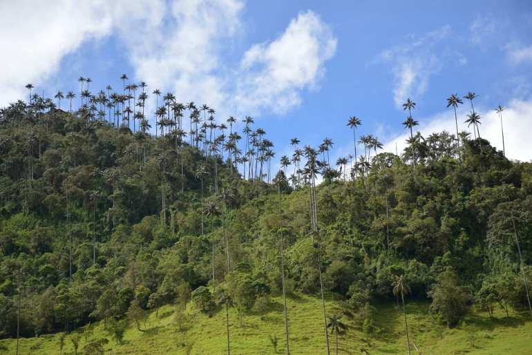 Cocora Valley is one of the top places to visit in colombia