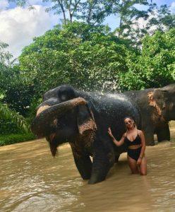 Bathing Thai Elephant in Phuket Sanctuary
