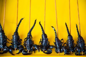 Thail street foodcandied scorpions on a stick